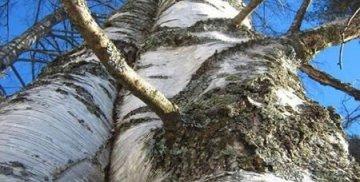 Usuwanie drzew i krzewów